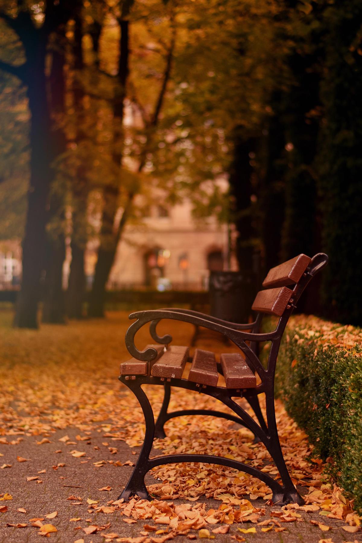 Aneta Tarasewicz - Park - wyróżnienie, fotografia
